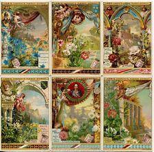 Chromo Liebig Sang. 379 TED Fiori Simbolici ANNO 1893