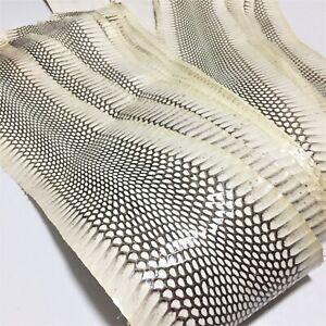 Asia Cobra Snake Skin Hide Leather Snakeskin Craft Supply Natural Glossy ETA 1wk