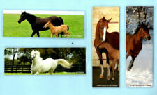 Horse Collectable Novelties