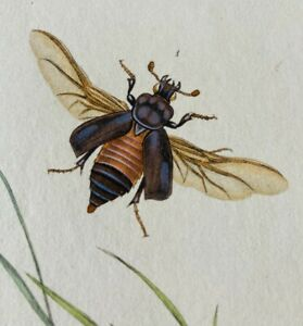 1780's copper engraving fine hand colour, hand made paper prints beetles insects