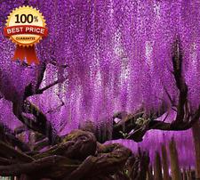 20pcs++Hot Sale Rare Purple Wisteria Flower Seeds For Diy Home Garden Plants !!