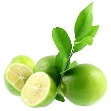 20Pcs Lemon Tree Heirloom Rare Fruit Seeds  for Garden Indoor Outdoor Home Decor