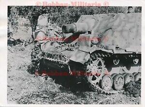 W161 Foto Italien Aprilia 1944 Sturmpanzer IV BRUMMBÄR Sturmgeschütz Zimmerit !