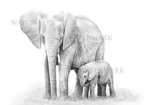 Mothers watchful Eye. A4 Elephant Graphite Sketch (print)