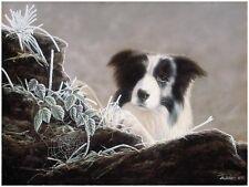 More details for john silver faithful companion (unframed) border collie bordies sheep dog art