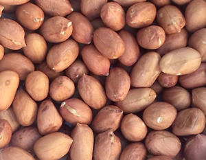 Raw Red Skin Peanuts - Unsalted, Unroasted - US Grown, 5-15 Pounds