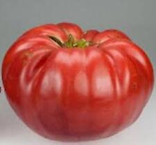 Giant Belgium Pink Tomato *Heirloom* Non-Gmo (50 Seed's) 2018