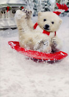 Polar Bear Snow Slide Box of 10 Funny Christmas Cards - Greeting Card by Avanti