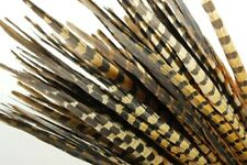 100 Pcs ENGLISH RINGNECK PHEASANT Natural Feathers 6-8
