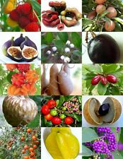 RARE FRUITS MIX sweet edible plant tree fragrant exotic fruit seed pack 15 seeds