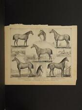 New York, Chautauqua County Engraving, Horses, A. Burnham 1881 N6#40