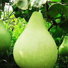 20pcs Gourd Seed Spoon Bottle Gourd Lagenaria Siceraria Garden Seeds Vegetable