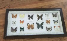 16 Vintage Butterfly Taxidermy Collection Framed Display Papilio Helenus Paris