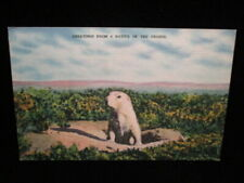 Greetings From A Native Of The Prairie Dog Wind Cave Sd Vintage Animal Postcard