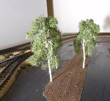 Birke 12 cm, 120 mm hoch in Premium Qualität