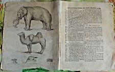 1784 Ancienne Gravure Estampes EO. Éléphant,Mangouste,Loris,Chameau,Chauve-souri