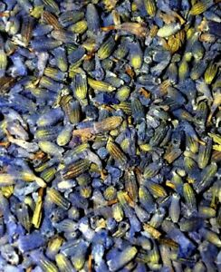 Organic Dried Lavender Buds - Lavandula angustifolia - Apothecary Wicca Flowers