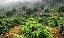 Brazilian Santos Whole Coffee Beans Fresh Roasted Daliy 2 / 1 Pound Bags
