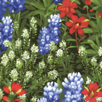 Texas Bluebonnets Moda quilting Fabric 3 yds Cotton Wildflowers sewing 32362-11