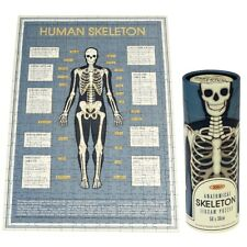 Rex London ANATOMICAL SKELETON PUZZLE IN A TUBE