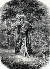 Antique print: Le Lierre de Jean Jaques Rousseau Feuilancourt gravure 1859