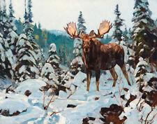 Rungius Carl Bull Moose Canvas 16 x 20    #7217