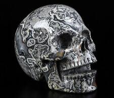 "Huge 5.1"" CROCODILE JASPER Carved Crystal Singing Skull, Crystal Healing"