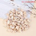 50pcs Natural Sea Shell Conch Aquarium Landscape Decor Home Decor Shell Crafts^