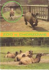 Postcard: Poland - Zoo w Chorzowie