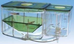 Nursery Aquarium Guppy Fish Water Tanks Babies Female Breed Safe