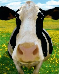 Funny Thank You Black & White Cow Moo Much Obliged Theme Hallmark Greeting Card