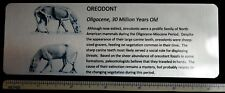 Large Oreodont Metal Display Label, Merycoidodon, Custom 6x2 inch, Free Shipping