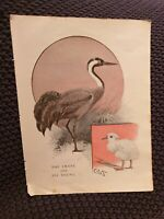 The Crane and it's Young - Antique Book Print
