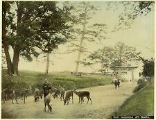 c.1890 JAPAN KASUGA AT NARA GENUINE ANTIQUE ALBUMEN PHOTOGRAPH