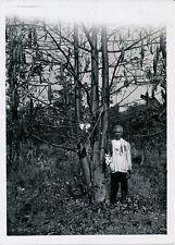 INDOCHINE c. 1950 - Long Thanh Plantation de Kapokiers - P 2459