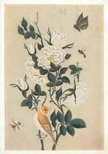 Iran miniature a bush of white roses bird bee  Postcard