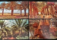 Date Orchard Tree Farm Coachella Valley California CA Palm Springs Lot Desert 5
