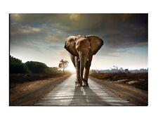 Alu-Dibond Wandbild Walking Elephant Design Bild Afrike AB-616 Butlerfinish®