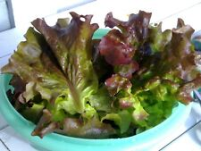 2,000+ Red Romaine Lettuce Seeds- Heirloom- For 2018   $1.69 Max Shipping/Order