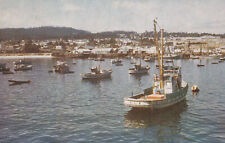 Fishing Fleet at Monterey Habor Monterey California Postcard 1950's
