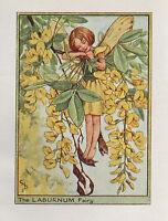 Flower Fairies: THE LABURNUM FAIRY Vintage Print c1930 by Cicely Mary Barker Art