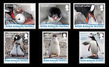 British Antarctic 2016 Gentoo Penguins Letter Rate 6v MNH