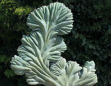 Myrtillocactus geometrizans cristata, Ming Thing, 10 seeds, naturally bizarre