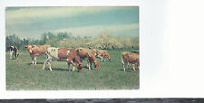 Pleasant Pastures  Cattle Grazing  Tree background  Unused Chrome Postcard 544