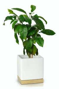 White Ceramic Flower Pot Wooden Base Home Decor Modern Plant Holder Pots