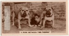 A Cat With A Bulldog On Each Side Cute! 1930s Trade Ad Card