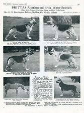 GERMAN SHEPHERD OUR DOG 1951 DOG BREED KENNEL ADVERT PRINT PAGE BRITTAS KENNEL