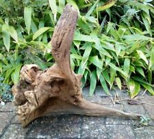 Natural Tree Root Sculpture Garden Display Piece Indoor Centre Piece L Shape