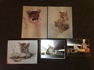 Bundle Pictures, Josephine Marsh, Phil Prentice, Big Cats, Cougar, Lions, Tigers