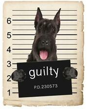 New ListingGiant Schnauzer Mugshot Bad Dog Fridge refrigerator Car Magnet